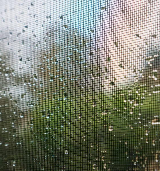raindrops on a mosquito net on a rainy day; green trees in the b